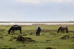 Three horses eating in a field. High quality photo. Selective focus