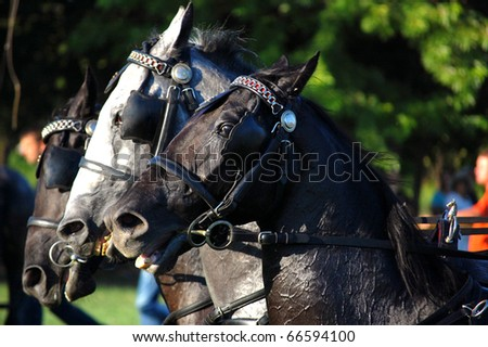 Three horses galloping - stock photo