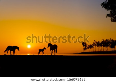 three horses silhouette at great sunset