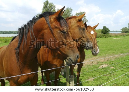 Three horses standing side by side by a fence - stock photo
