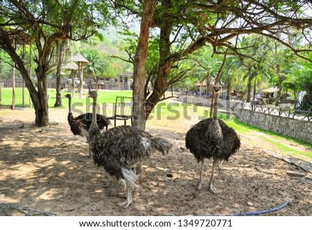 Three is Ostrich #1349720771