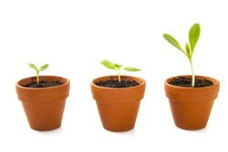 Three jars with growing plants isolated over white