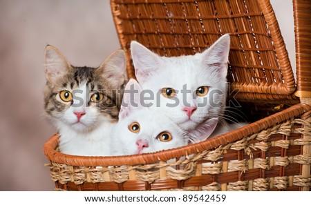 Three kittens in a basket