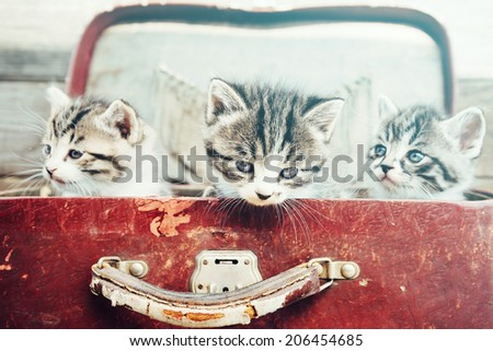 Three kittens in vintage suitcase on a wooden background