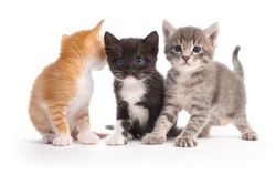 three kittens isolated on white background