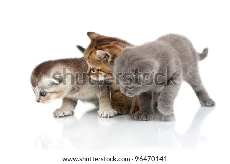 Three kittens. It is isolated on a white background. - stock photo