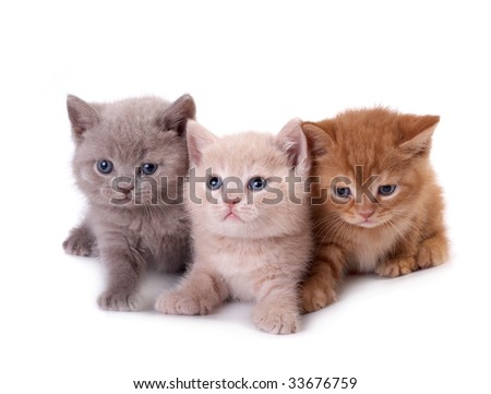 Three kittens on a white background - stock photo