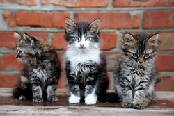 three kittens on the bricks wall background