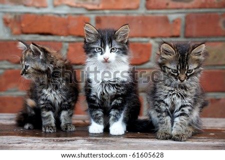 three kittens on the bricks wall background