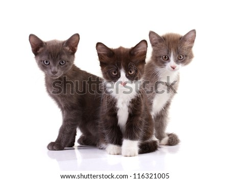three kittens siting isolated on white