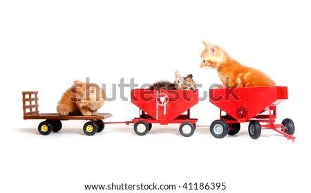 Three kittens sitting on toy wagons