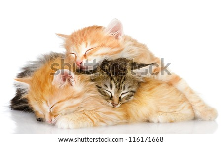 three kittens sleep a heap. isolated on white background