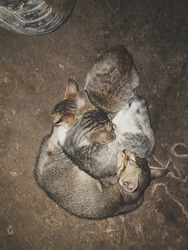three kittens sleeping together in the garden
