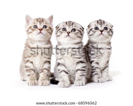 Three kitties peer into top