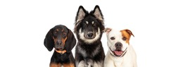 Three large breed dogs together on white web banner with room for text