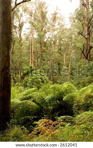 animals in rainforest. animals livethe rainforest