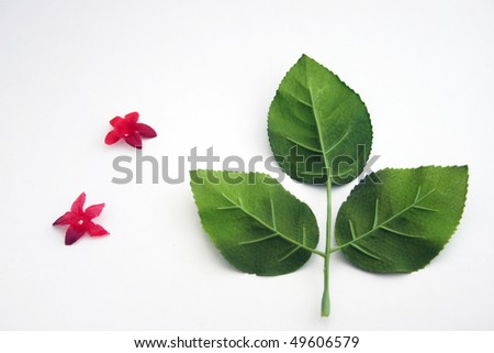 Three leaf with two small red flowers