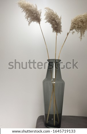 Three leafs flowers in the long glass vase Stok fotoğraf ©