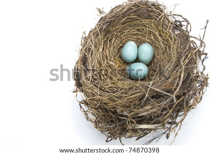 Three light blue robin eggs in their nest on a white background - stock photo