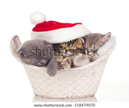 Three  little cats in red cap of santa sleeping in basket isolated on white