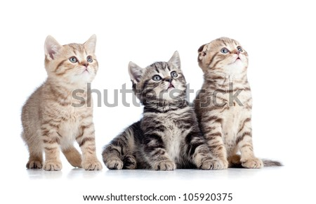 three little cats kittens looking up isolated on white background