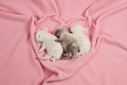 Three little cute rabbits sleeping on a background of pink blanket.