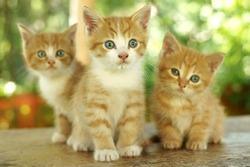 three little cute red kitten against green bokeh background. shallow dof. focus on kitten in the centre.