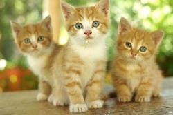three little cute red kitten sitting on wooden board against green bokeh background