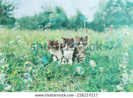 Three little kitten sitting among soap bubbles on summer green meadow. Image with vintage instagram filter