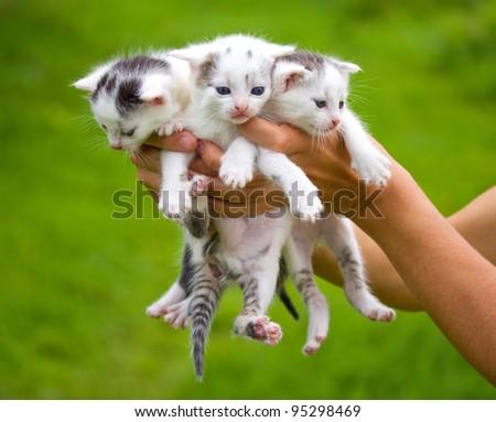 three little kittens in hands