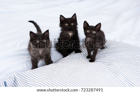 three little kittens sitting on ...