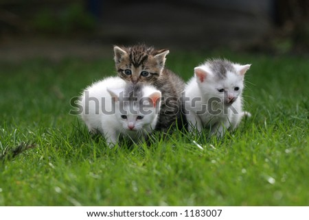 Three little kittens staying close together on the lawn