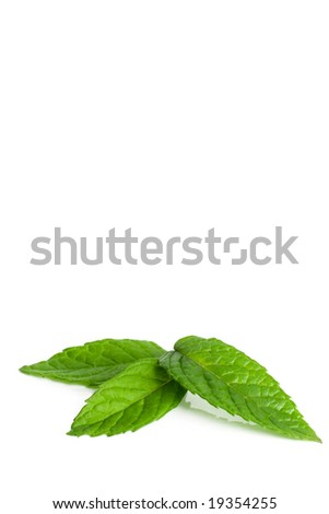 three mint leaves on white background
