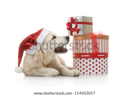 Three-month golden retriever puppy in a red Santa Claus hat near to a stack of boxes with gifts - stock photo