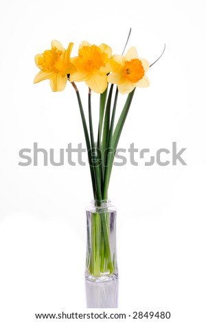 Three Narcissus in a vase