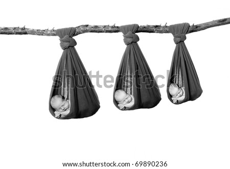 Three newborn babies handing in a cocoon sling by a tree branch