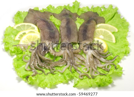 three nice fresh squids on the green lettuce leaves with lemon slices isolated on white background