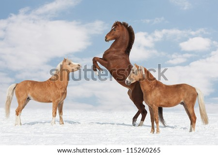Three nice horses in the winter