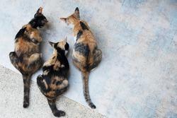 three of cat