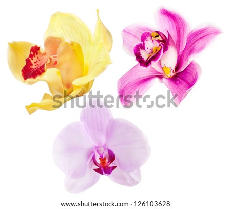 three orchid flowers isolated on white background