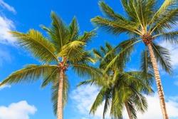 Three palm trees against a blue sky