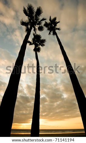 three palm trees at sunset