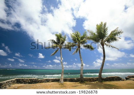 Three palm trees on the edge of the island of Oahu, Hawaii.