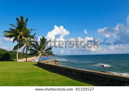 Three palms on the ocean beach, Sri Lanka
