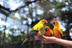 Three parrots discussion on the hand