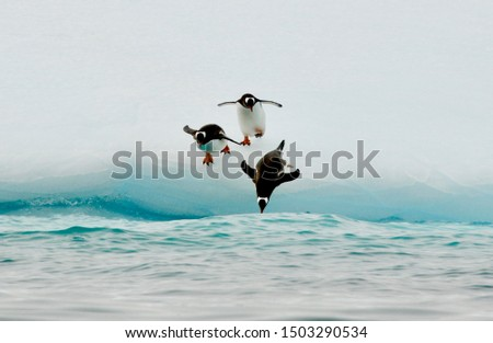 Three penguins are jumping into the ocean. Stock photo ©