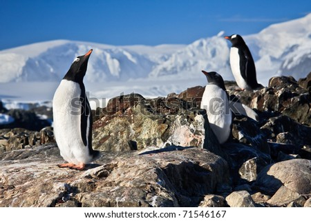 three penguins dreaming sitting on a rock mountains in the