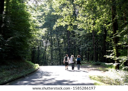 Three people are walking on road through the forest
