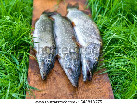 Three pikes lie on a wooden board surrounded by grass on nature #1546818275