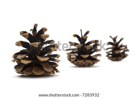 Three pine cones isolated on white background - stock photo